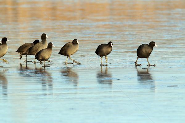 Caminhada cuidar congelada superfície alfa individual Foto stock © taviphoto