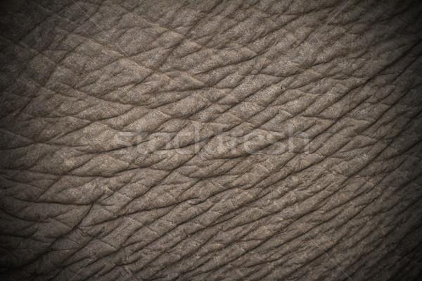 elephant skin texture Stock photo © taviphoto