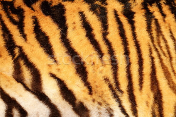 beautiful tiger textured fur Stock photo © taviphoto