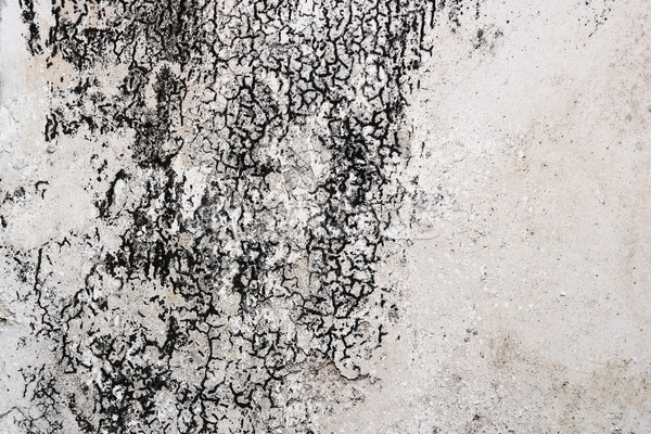 Pleśń uszkodzony gipsu niebezpieczny domu tekstury Zdjęcia stock © taviphoto