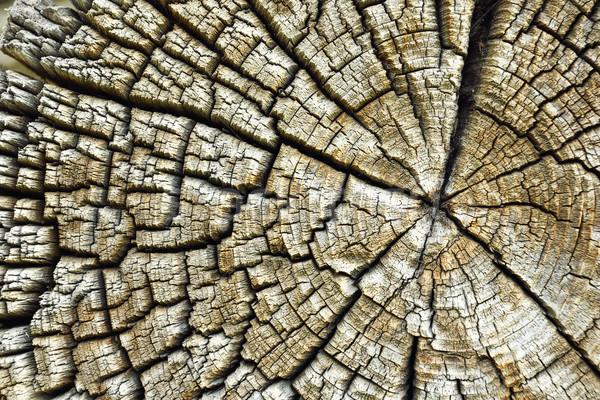 Scheuren oude houten echt textuur doorsnede Stockfoto © taviphoto