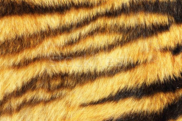 Tigre réel animaux cuir prêt Photo stock © taviphoto