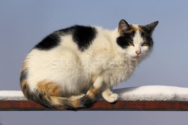 Stock photo: piebald cat on the fence