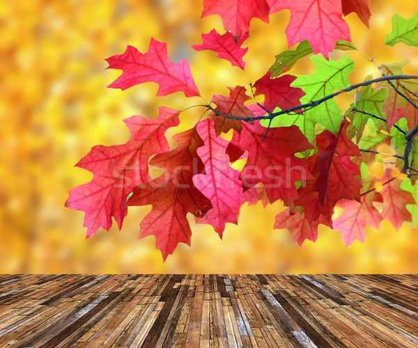 beautiful red leaves over veranda Stock photo © taviphoto