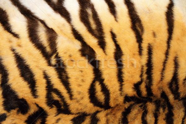 Zwarte echt tijger bont mooie Stockfoto © taviphoto