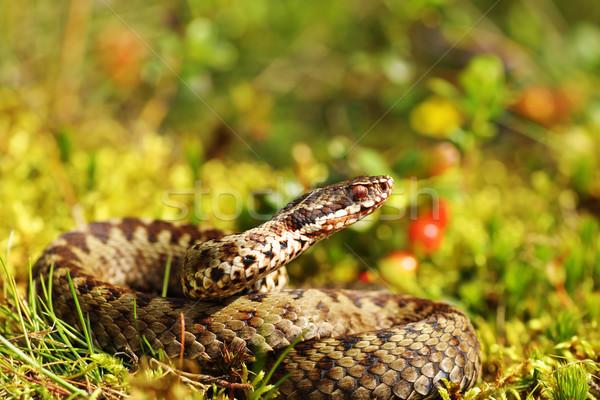 Gyönyörű férfi európai természetes élőhely természet Stock fotó © taviphoto