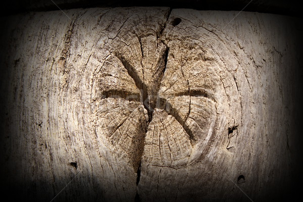 interesting star in wood knot Stock photo © taviphoto