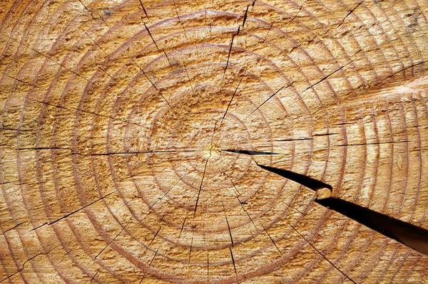 Részleg lucfenyő nyaláb közelkép gyűrűk textúra Stock fotó © taviphoto