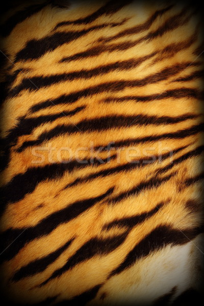 real tiger textured pelt Stock photo © taviphoto