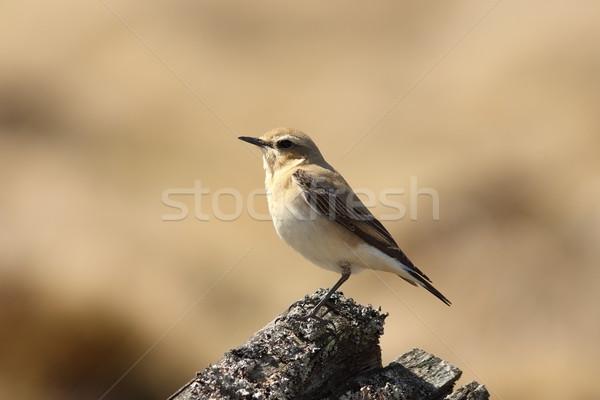 Női északi természet háttér madár áll Stock fotó © taviphoto