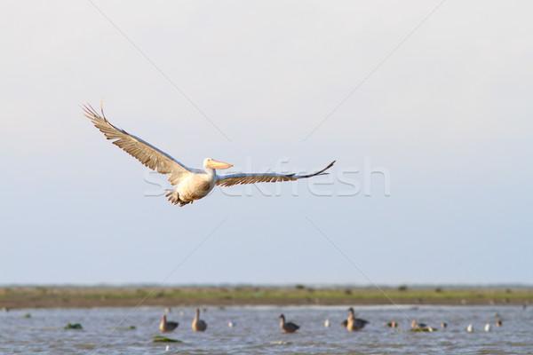 Gyönyörű repülés fehér sziget Duna delta Stock fotó © taviphoto