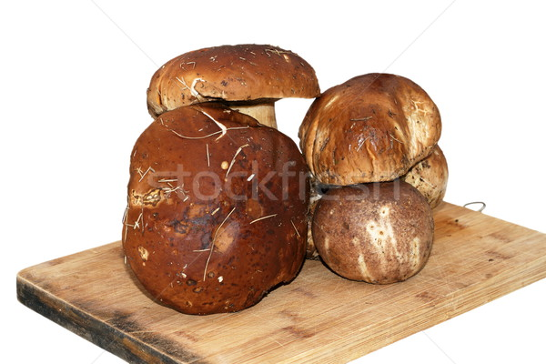 mushroom gathered from the forest ready for cooking Stock photo © taviphoto