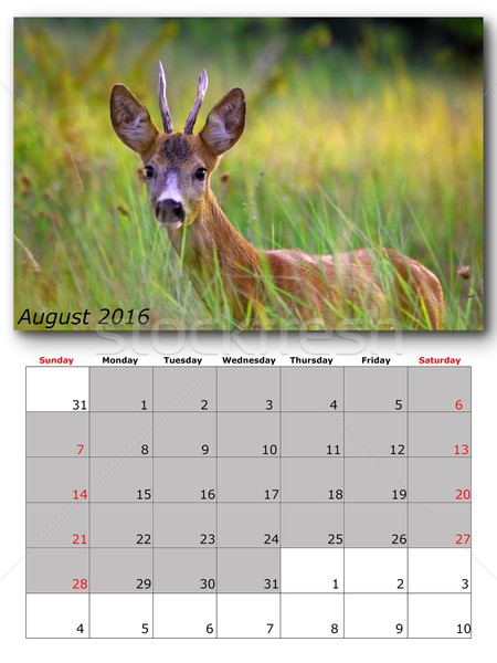 wildlife calendar august 2016 Stock photo © taviphoto