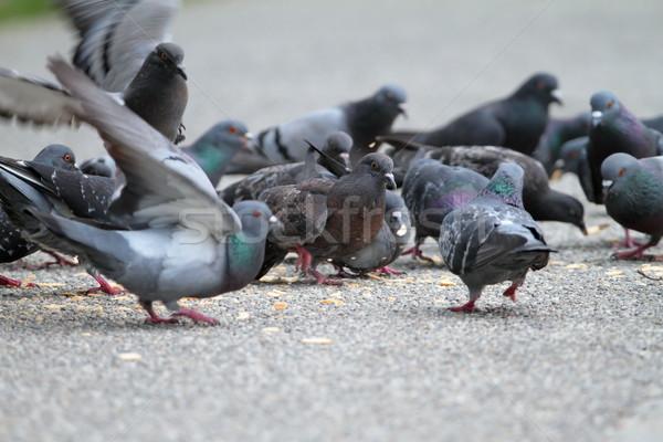Hambriento parque callejón comer alimentos calle Foto stock © taviphoto