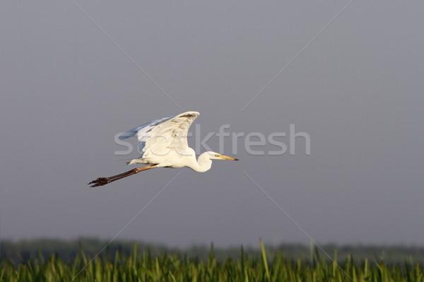 Stockfoto: Groot · vliegen · water · natuur · vogel · dier