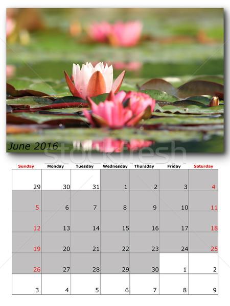 june nature calendar page layout Stock photo © taviphoto