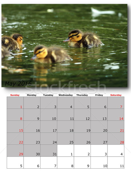Stock photo: may nature calendar page layout