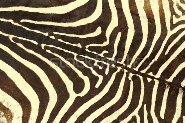 Zèbre rayé modèle texture réel cuir Photo stock © taviphoto