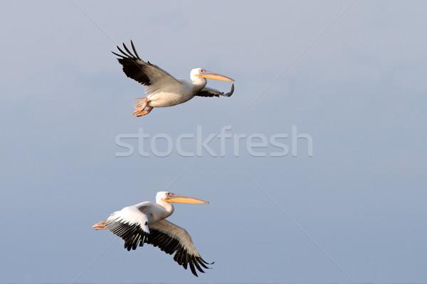 Dois voador juntos água casal Foto stock © taviphoto
