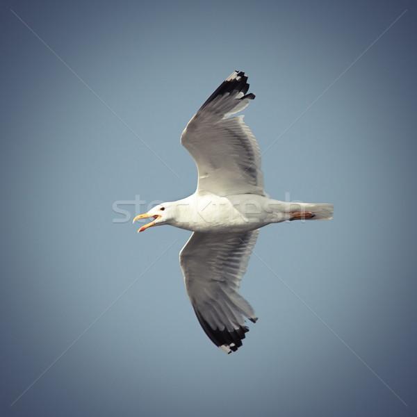 Repülés repülés égbolt óceán madár kék Stock fotó © taviphoto