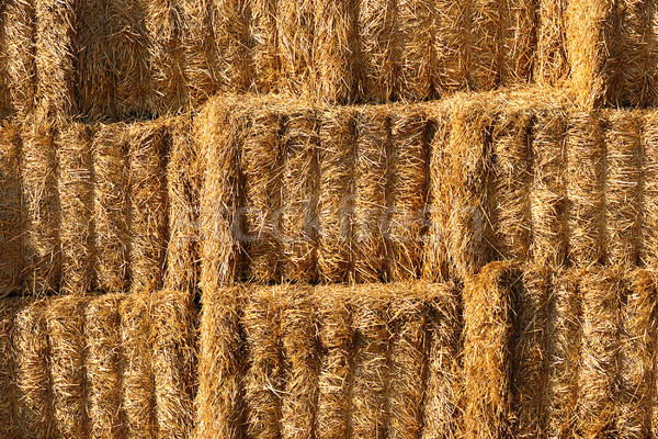 detail on heap of haystacks, textural image  Stock photo © taviphoto
