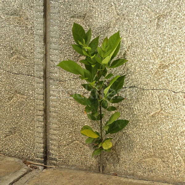 shrub growing on cracked concrete Stock photo © taviphoto