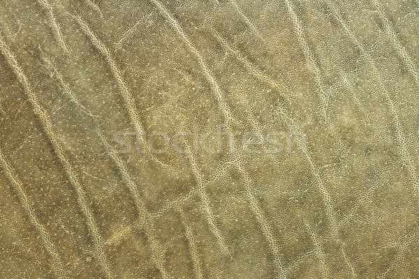 textured african elephant skin Stock photo © taviphoto