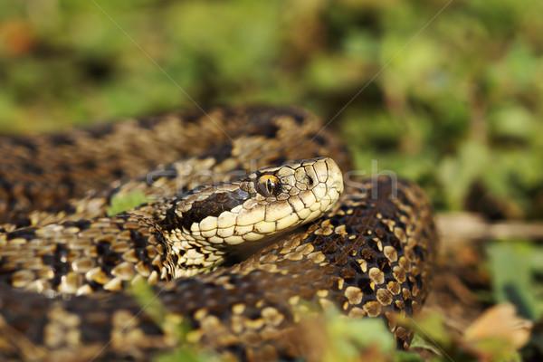 луговой природного среда обитания женщины красивой Scary Сток-фото © taviphoto