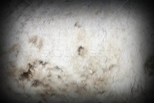 Sáros fehér ló részlet természet haj farm Stock fotó © taviphoto