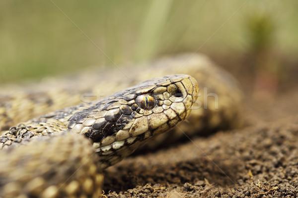 редкий луговой портрет макроса природы голову Сток-фото © taviphoto