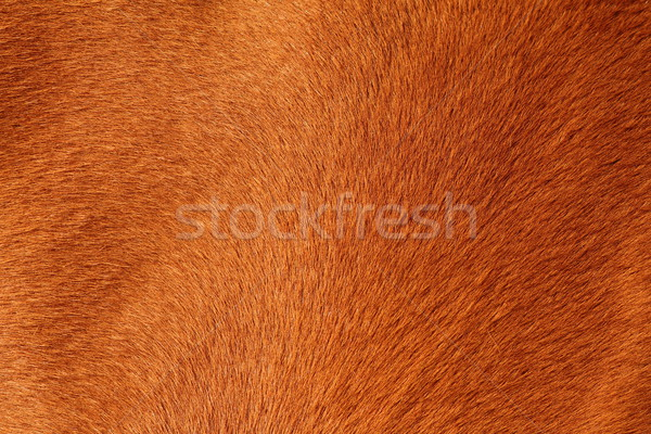 textured pelt of a brown horse Stock photo © taviphoto