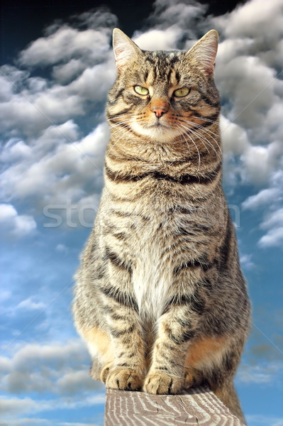Csíkos lusta macska kerítés megnyugtató felfelé Stock fotó © taviphoto