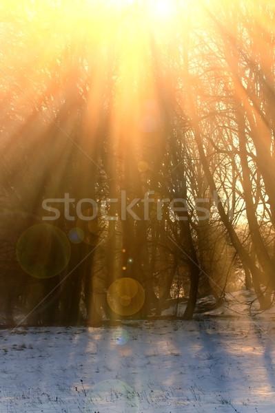 orange sun rays over the trees Stock photo © taviphoto