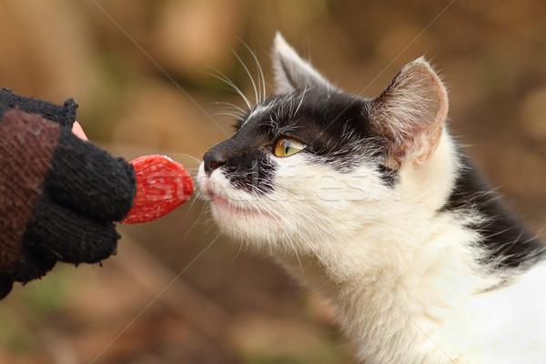 かわいい 猫 食べ サラミ 手 スライス ストックフォト © taviphoto