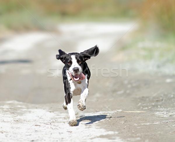 Stockfoto: Gelukkig · lopen · hond · camera · zanderig · weg