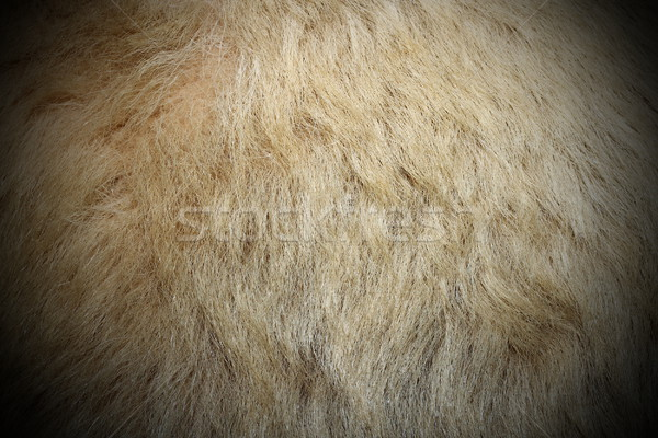 Jegesmedve fehér szőr igazi mintázott természet Stock fotó © taviphoto