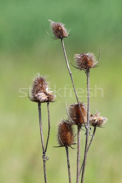 Verde fora foco beleza vida planta Foto stock © taviphoto