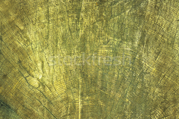 abstract image of annual rings on wood Stock photo © taviphoto