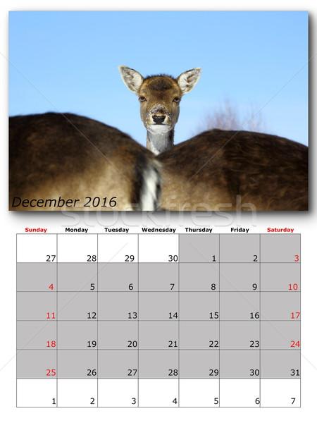 Wildlife kalender december 2016 print pagina Stockfoto © taviphoto