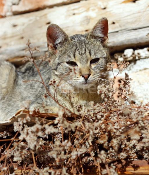 Cute leniwy kot koteczek ciepły Zdjęcia stock © taviphoto