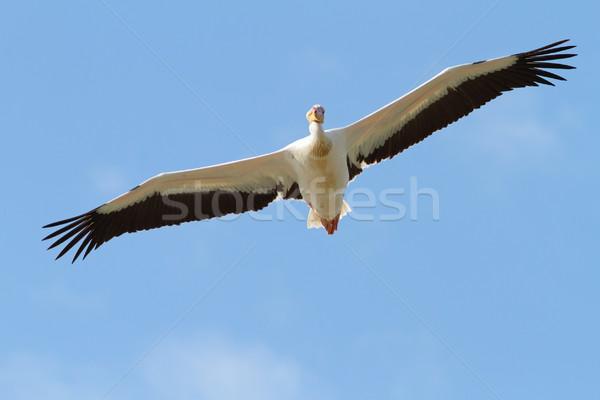 Groot Open vleugels heldere hemel water achtergrond Stockfoto © taviphoto
