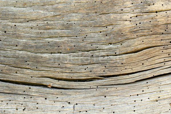 古い オーク 木材 昆虫 攻撃 ストックフォト © taviphoto