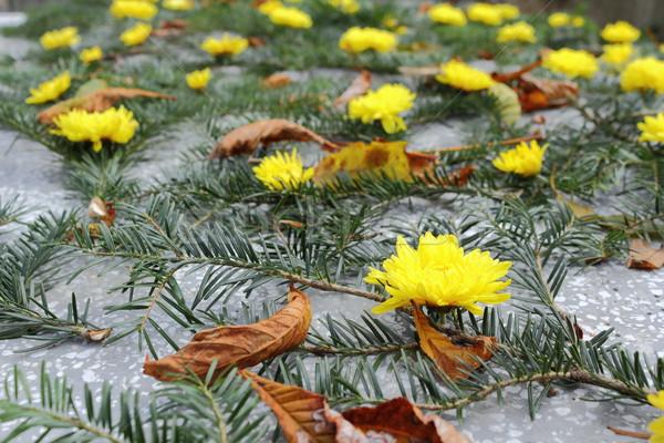 Sarı krizantem mezar ladin güzellik Stok fotoğraf © taviphoto