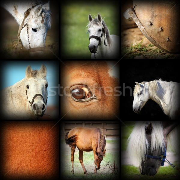 horses details image collection Stock photo © taviphoto