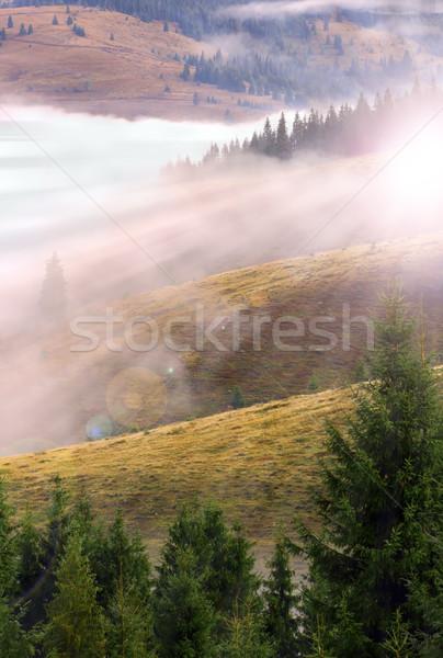 Tramonto montagna abete rosso boschi bella raggi Foto d'archivio © taviphoto