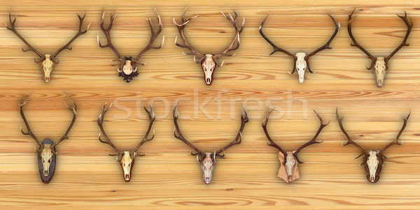 collection of hunting trophies on wooden background Stock photo © taviphoto