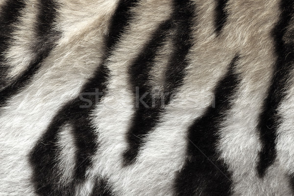 black and white real pattern of tiger pelt Stock photo © taviphoto