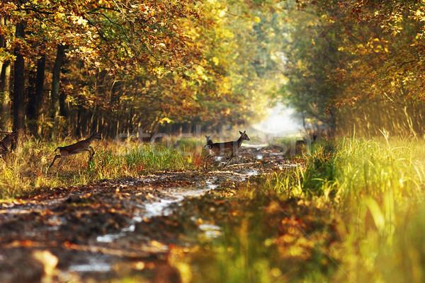 Outono mata rural estrada floresta beleza Foto stock © taviphoto