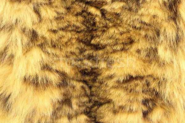 Kar leopar gerçek hayvan deri Stok fotoğraf © taviphoto