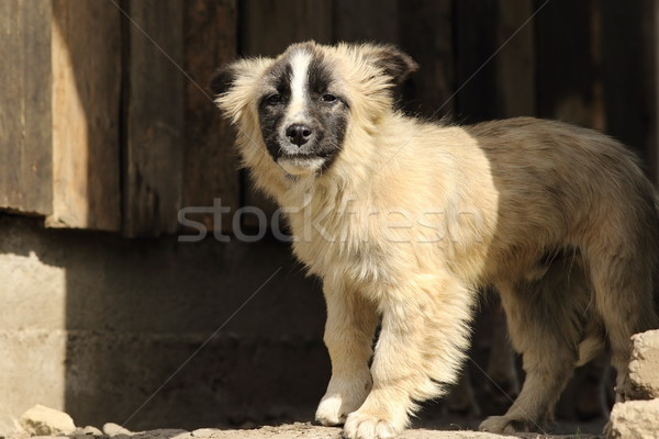 cute doggy Stock photo © taviphoto